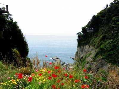 海とお花と生しらす丼@江ノ島