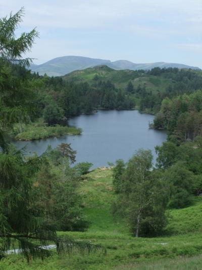 湖水地方 フットパスを歩く 8 ( ニアソーリー~ホークス・ヘッド~ターン・ハウズの往復 1)