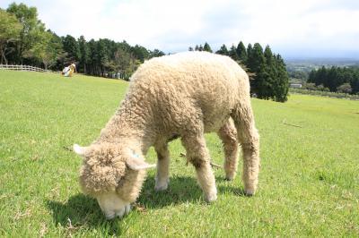 富士周辺をドライブ♪ まかいの牧場~ちょこっと富士急ハイランド~北口本宮冨士浅間神社