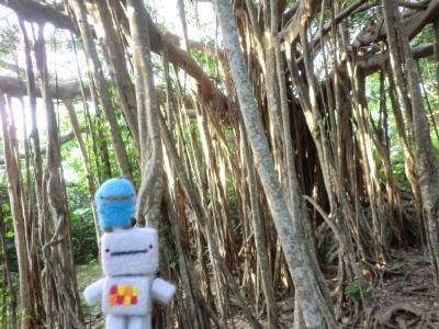 GW沖縄本土旅行③マングローブと最北端へ