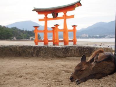 秋の広島(2泊3日)1日目 世界遺産の厳島神社と宮島を堪能する
