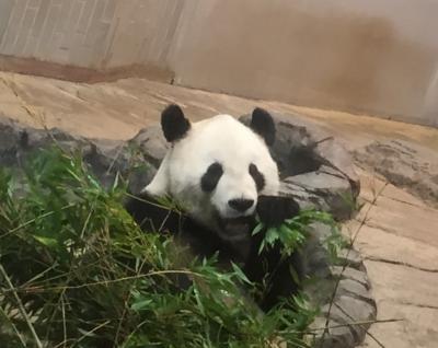 【2015・8】夏休み・東京都恩賜上野動物園