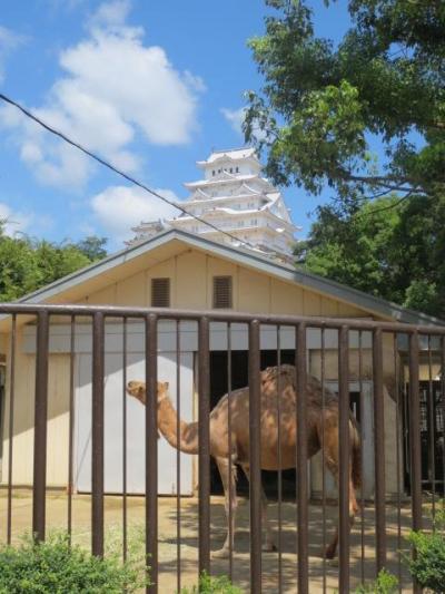 世界遺産の姫路城 動物園も忘れずに!