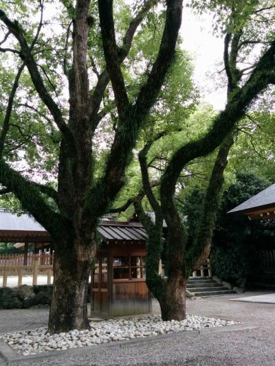 初の青春18きっぷで初の女一人旅6日目&7日目~広島ー名古屋~