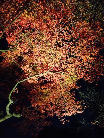 高台寺ライトアップ☆2015