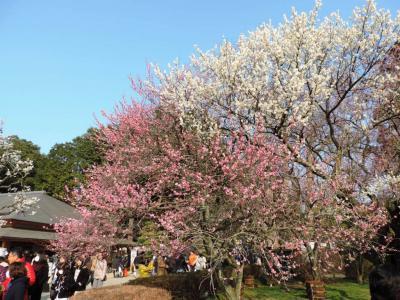 水戸_Mito この印籠が目に入らぬか!日本三名園の「偕楽園」を抱く徳川家ゆかりの地