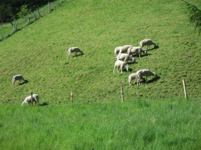 2011年、お孫ちゃま連れで、オーストリア&スイスの旅  (1)ミュンヘン経由 チロル州「Matrei am Brenner」へ