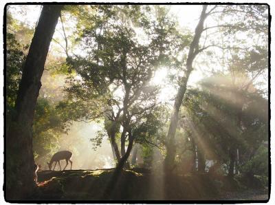 仏像に萌え~!の古都奈良ひとり旅 16(最終章) ★東大寺・・・美仏を求めて最後のそぞろ歩き・・・★