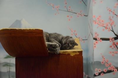 猫のサーカス