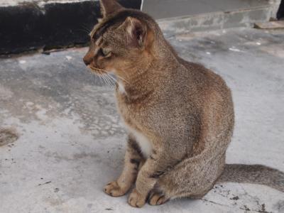 SG50☆シンガポールその14 Day4-2~シンガポールの猫島?セントジョンズ島へ遠足~