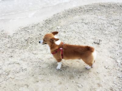 犬連れ、冬の沖縄ビーチリゾート?【1】