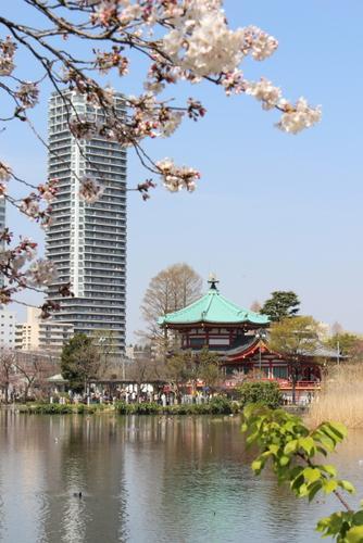 東京散歩③~上野・不忍池で花見~
