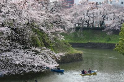 東京散歩④~千鳥ヶ淵さんぽみち~