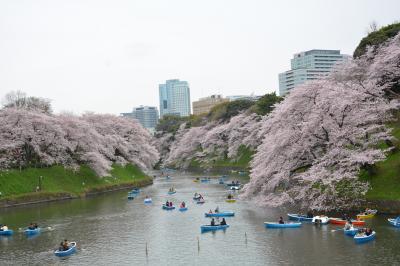 東京SAKURA散歩  満開の千鳥ヶ淵・ちょこっとだけ上野公園・夜桜は五反田の目黒川