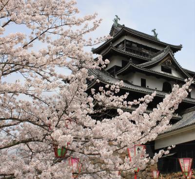 桜満開松江城