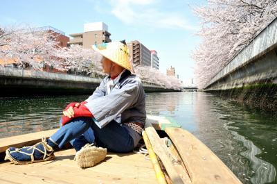 花のお江戸のお花見は、和船に乗って桜の下 ゆら~り ゆら~り 桜咲くキャンパスでのお花見は、ちょこっとセンチメンタルな気分になって・・・学び舎(まなびや)の 静寂(しじま)に舞うは 桜花