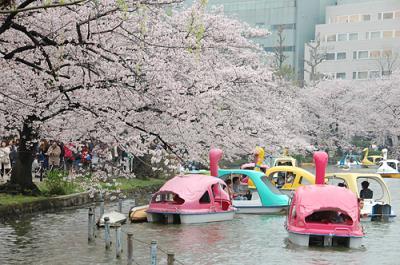 東京散歩 桜の2つの名所を歩いて(上野公園→浅草隅田川)