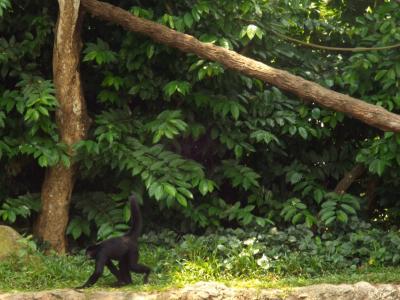 初めてのシンガポール ③動物園 前半