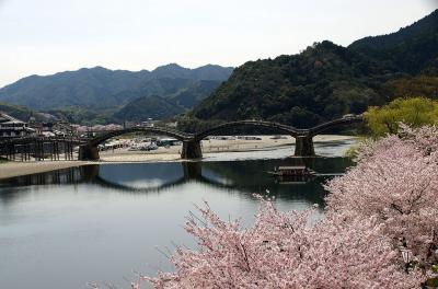 28年ぶりに二人で訪れた錦帯橋は花盛りでした。
