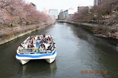【東京散策50】 さくら散り始めのお江戸深川さくらまつりと富岡八幡宮、深川不動尊を散策