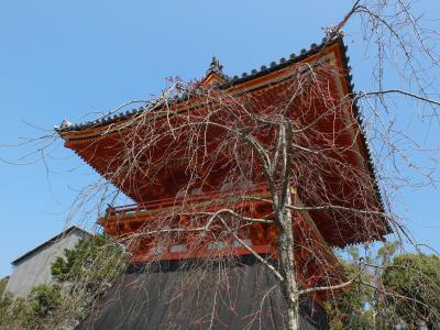 桜に呼ばれて春の京都へ 1日目