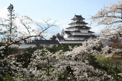 南東北の桜を訪ねる1 会津鶴ヶ城の桜