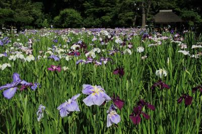 小石川後楽園界隈を散策