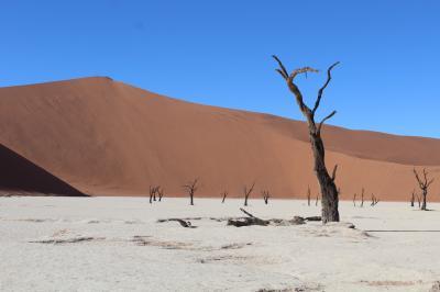 【75】旅行記31 (1)赤い砂の風景画・ナミブ砂漠ツアーの旅