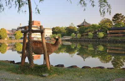 うるわしの奈良 ひとり旅 (5)奈良の街をぶらぶら