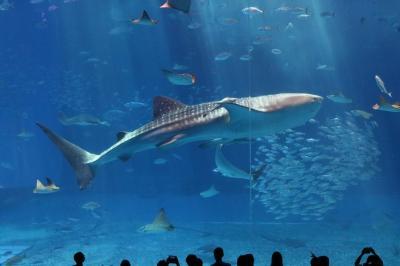 沖縄旅行:6日目 沖縄美ら海水族館と青の洞窟体験ダイビング