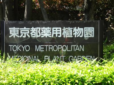 禁断のケシの花が咲く、東京都薬用植物園