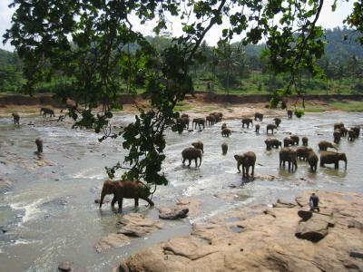 象の孤児院(Pinnawala, Sri Lanka)