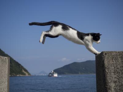 猫島を巡る瀬戸内海縦断の旅