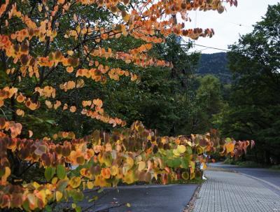 日光の紅葉はまだまだ先(10月4日)
