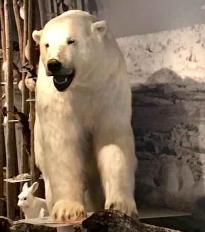 2016 長月 北極圏&北欧ちょいブラ!(北極圏クルーズ1)5〜6日目�