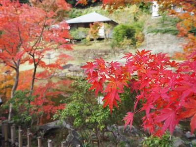 今年も行きたい鎌倉紅葉(旅行:2015/12/6)