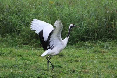 絶景と食を求めて夏の道東めぐり (6)野付半島・納沙布岬と丹頂鶴自然公園