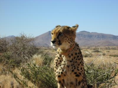 女ひとり旅、タンザニアから南アフリカまでを結んでみた!~Sossusvlei & Swakopmund Adventure Safari DAY4~