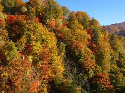 今日のお宿は新玉川温泉。強烈な本格温泉です。紅葉もピークですごかった。