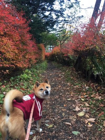 ワンコと旅行♪紅葉を求めて~軽井沢から海野宿、懐古園での散策~