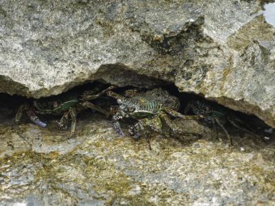 東海の小島の磯の白砂に われ泣きぬれて 蟹とたはむる。(ミステリー・アイランドにて)