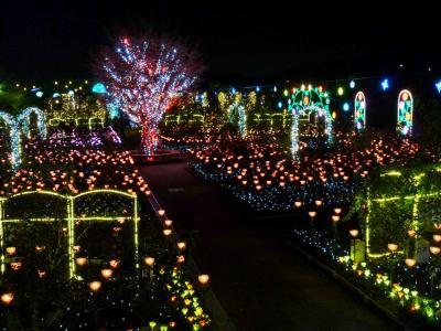 あしかがフラワーパークのイルミネーション_2016_(栃木県・足利市)