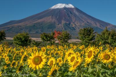 2016年10月山中湖ロッジ滞在記 ~山中湖周辺の富士山、夏と秋が混在する不思議な光景~