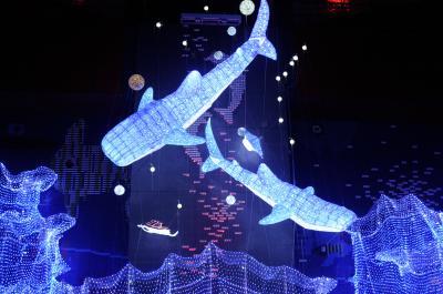 海遊館史上最大 ちきゅうたいかんイルミネーション! 120万球の輝き