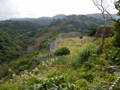 秋の沖縄・・世界遺産「城」+アルファの旅♪2日目①・・備瀬のフクギ並木と今帰仁城。