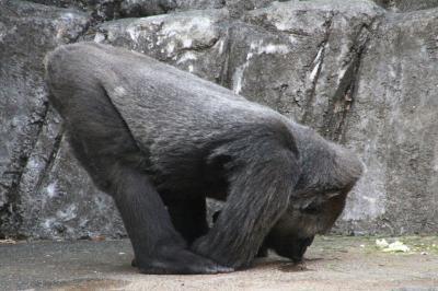 お嫁入りするまいちゃんのお別れ会に出たくて千葉市動物公園へ(3)珍しく回れたモンキーゾーンや、千葉市動物公園でははじめてのライオンたち他、小動物ゾーン・草原ゾーン・鳥類ゾーンの動物たち