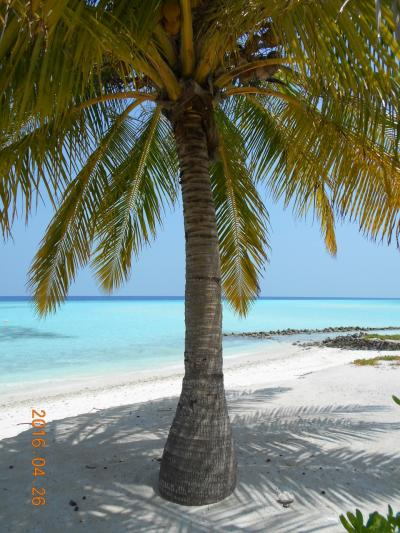 モルディブの風にそよぐヤシの木と、海の色が綺麗すぎでいい感じ~!
