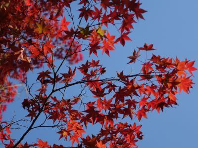 2016秋の京都~紅葉を求めて銀閣寺から吉田山、真如堂へ