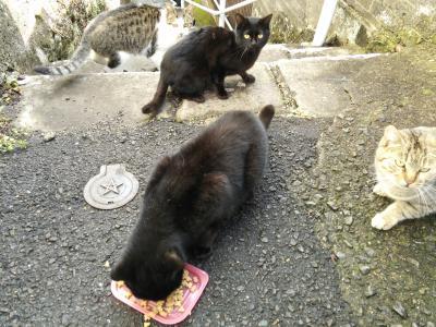 長崎3日間   カピバラと猫