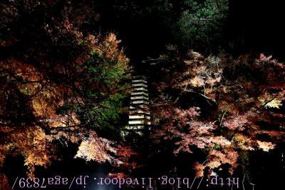 #307 2016年12月3日 鎌倉 長谷寺(長谷観音) もみじ狩りぃ(2)・・・・・ライトアップされたもみじっす 皆さん知ってますね ギャラリーがすごい初詣に来たのかって勘違いする位 混雑してました・・・・(苦笑